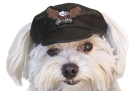 Shop for Dog Hats