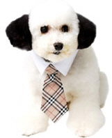 Shop for Dog Ties
