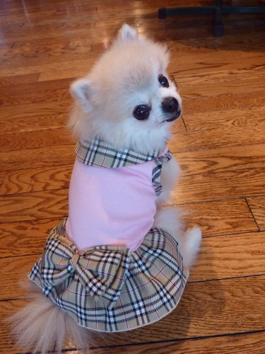 Burberry Dog Dress I