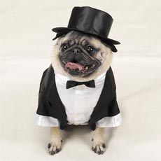 Casual Canine Tux with Tails and Top Hat
